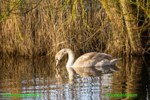 Vogels op het water